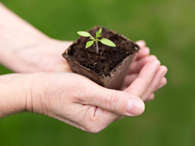 Melyek a legkönnyebben és a legnehezebben termeszthető kerti növények?
